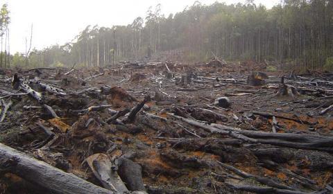 Вырубка лесов в Киевской области будет запрещена
