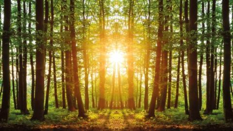 Государству вернули 47 гектаров леса под Киевом, которые незаконно присвоили частные лица